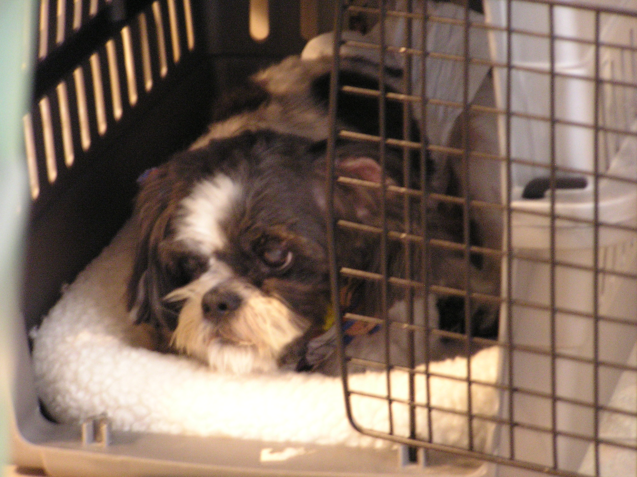 Alfie_in_crate_102006.jpg