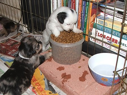 Whitie_standing_on_food_bowl_with_Booker_10_11_06.jpg