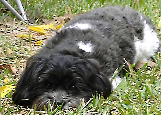 Smitty in Grass_edited.jpg