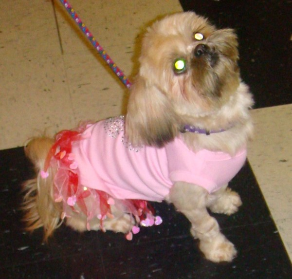 Klassy in her parade costume.jpg