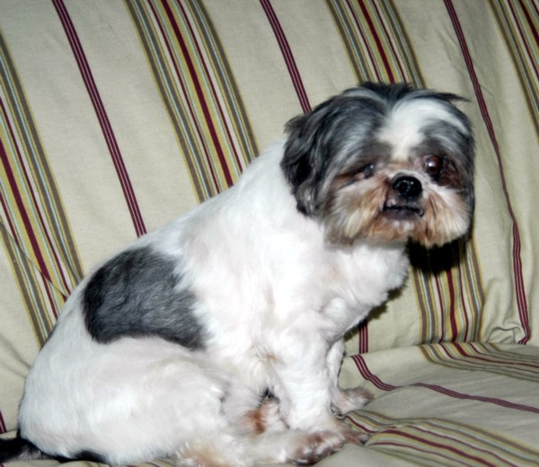 pate-davis-deogi-9-5-2008-003.jpg